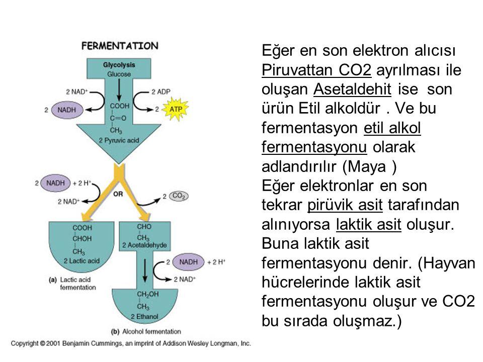 Eğer en son elektron alıcısı Piruvattan CO2 ayrılması ile oluşan Asetaldehit ise son ürün Etil alkoldür .