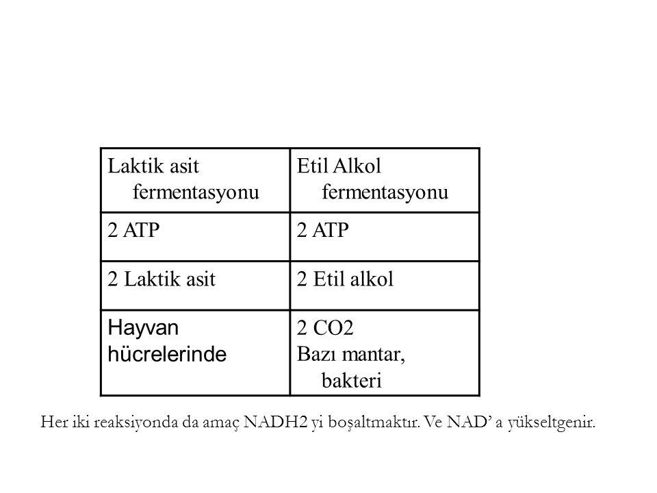 Laktik asit fermentasyonu Etil Alkol fermentasyonu 2 ATP 2 Laktik asit