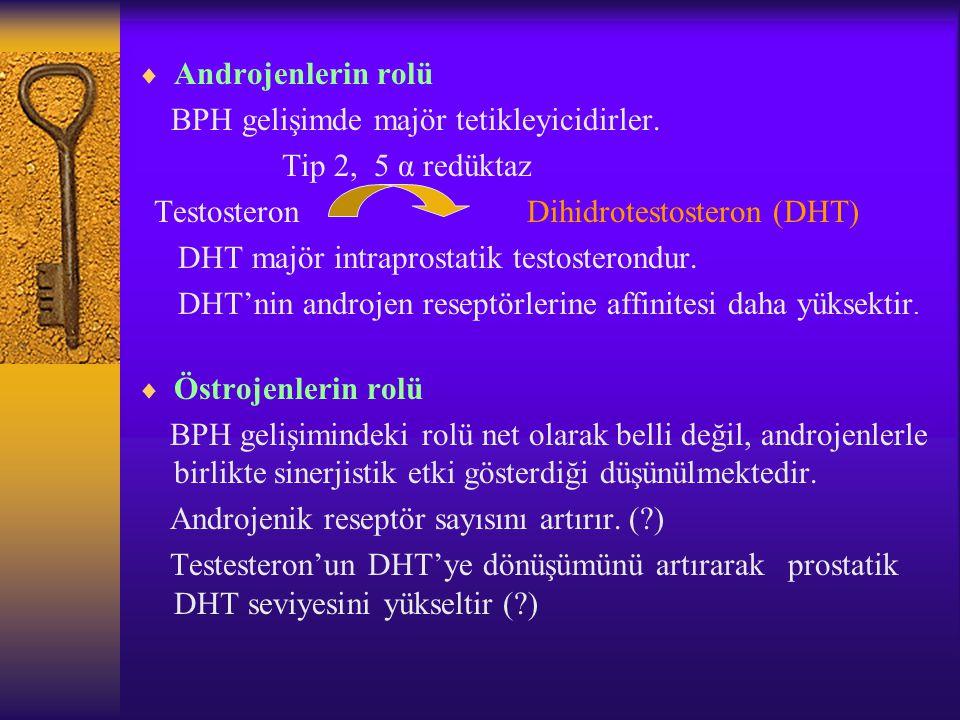 Testosteron Dihidrotestosteron (DHT)