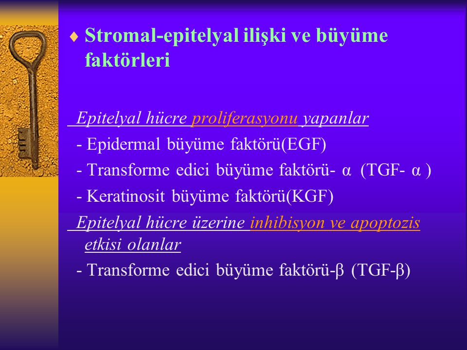 Stromal-epitelyal ilişki ve büyüme faktörleri