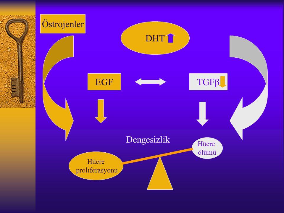 Östrojenler DHT EGF TGFβ Dengesizlik Hücre ölümü Hücre proliferasyonu
