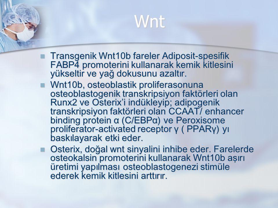 Wnt Transgenik Wnt10b fareler Adiposit-spesifik FABP4 promoterini kullanarak kemik kitlesini yükseltir ve yağ dokusunu azaltır.