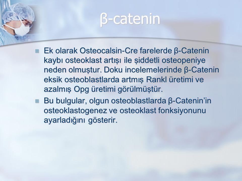 β-catenin