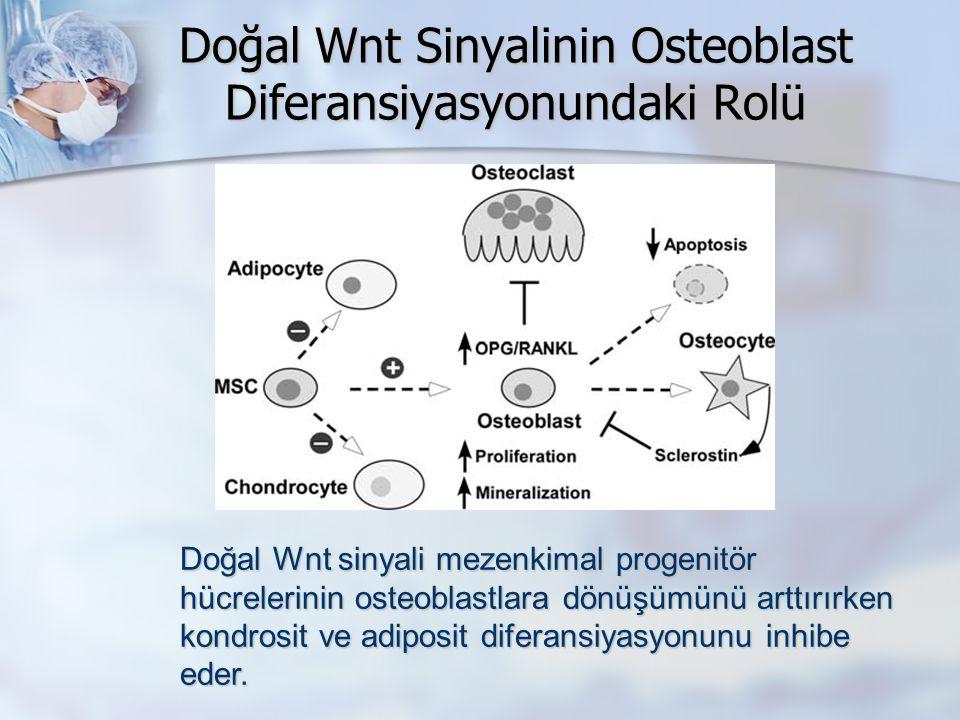 Doğal Wnt Sinyalinin Osteoblast Diferansiyasyonundaki Rolü