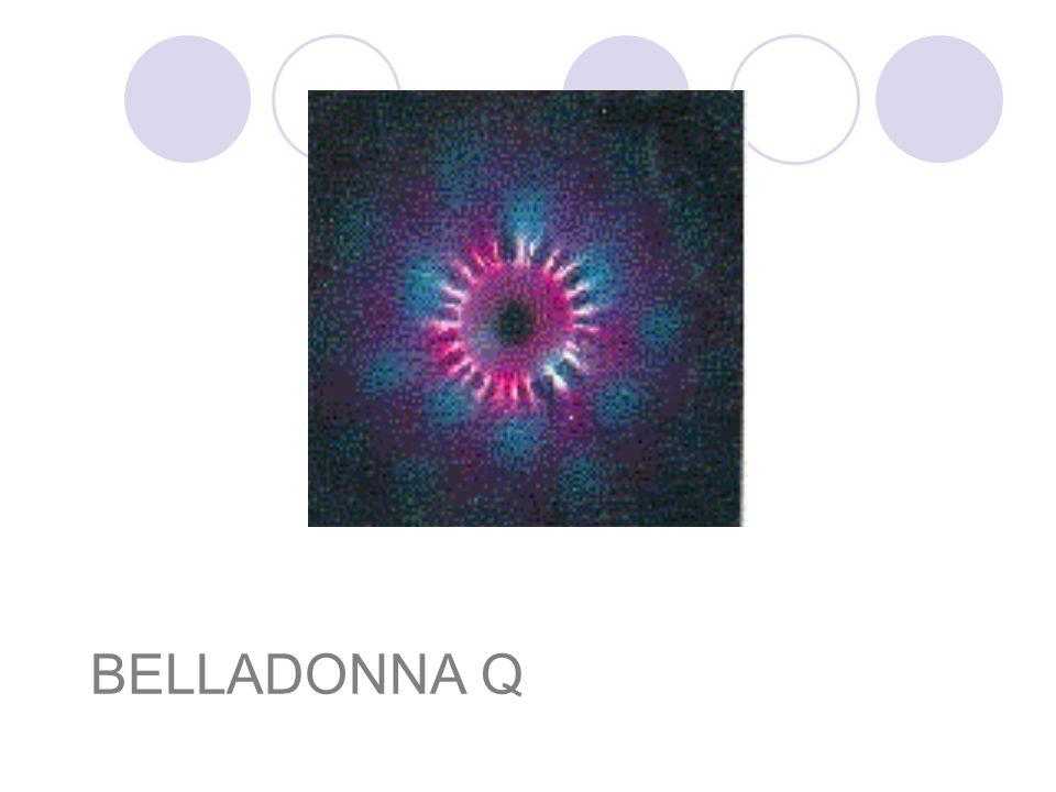 BELLADONNA Q