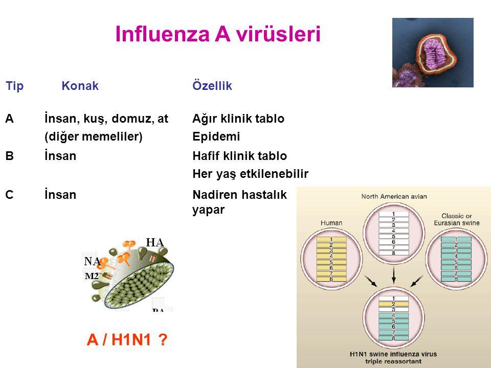 Influenza A virüsleri A / H1N1 Tip Konak Özellik A