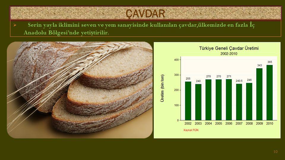 ÇAVDAR Serin yayla iklimini seven ve yem sanayisinde kullanılan çavdar,ülkemizde en fazla İç Anadolu Bölgesi'nde yetiştirilir.