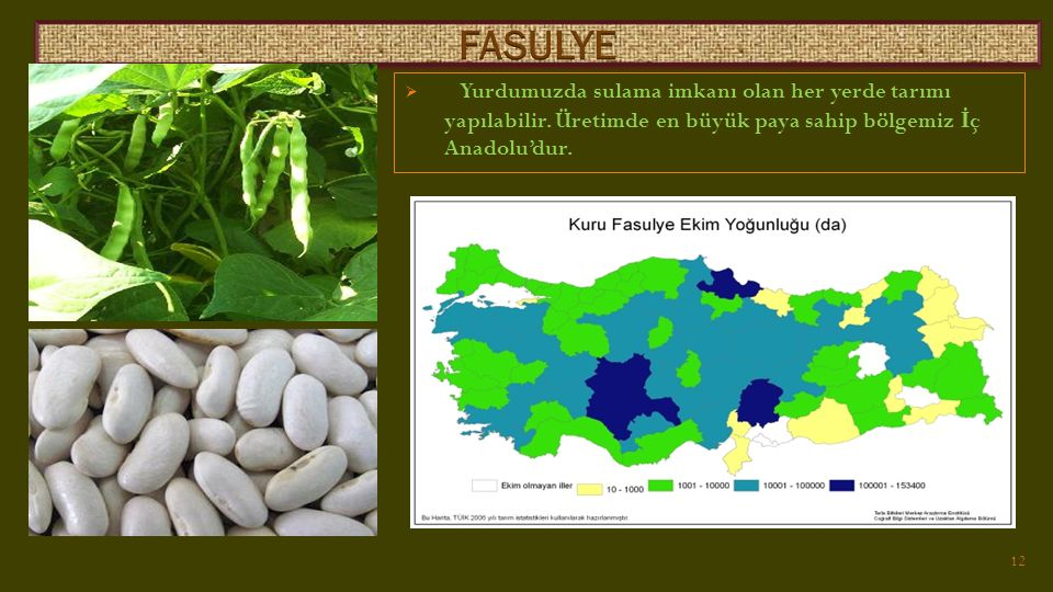 FASULYE Yurdumuzda sulama imkanı olan her yerde tarımı yapılabilir.