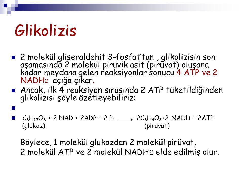 Glikolizis