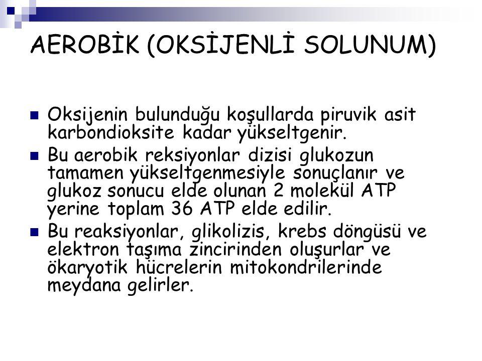 AEROBİK (OKSİJENLİ SOLUNUM)