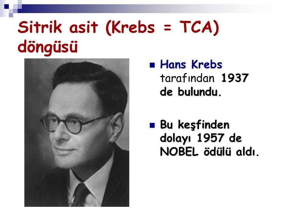 Sitrik asit (Krebs = TCA) döngüsü