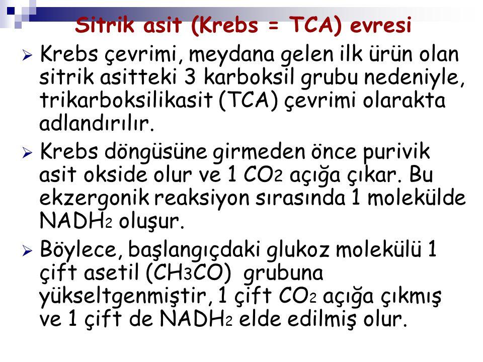 Sitrik asit (Krebs = TCA) evresi