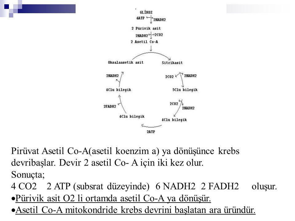 Pirüvat Asetil Co-A(asetil koenzim a) ya dönüşünce krebs devribaşlar
