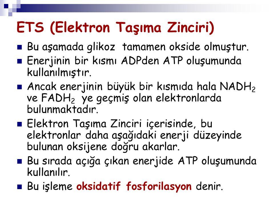 ETS (Elektron Taşıma Zinciri)