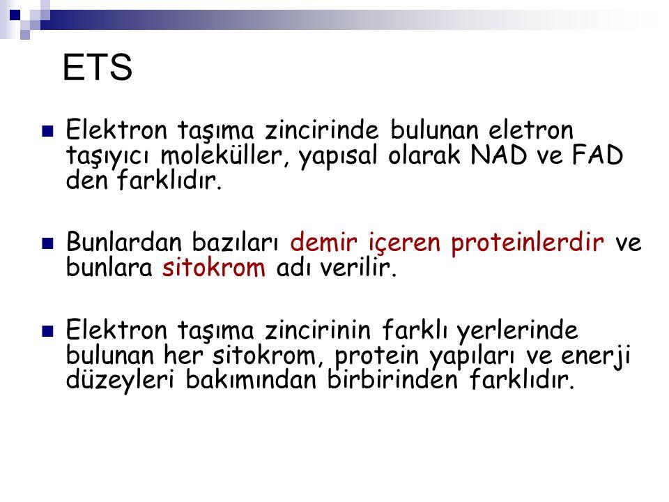 ETS Elektron taşıma zincirinde bulunan eletron taşıyıcı moleküller, yapısal olarak NAD ve FAD den farklıdır.