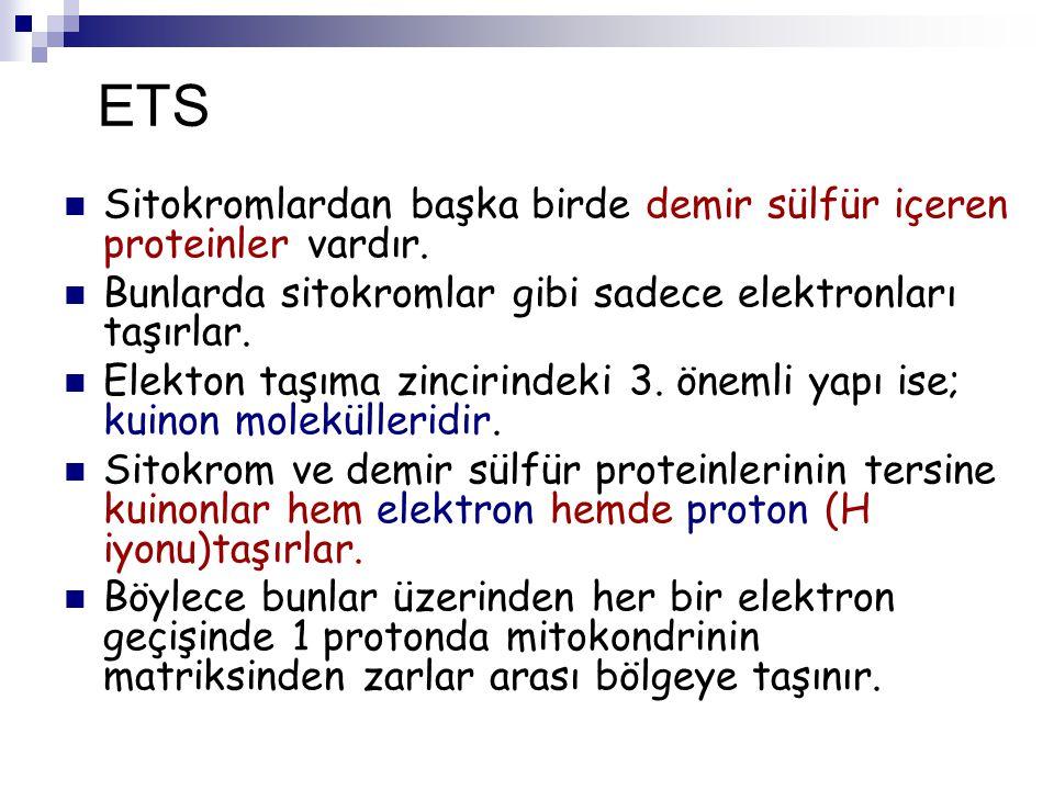 ETS Sitokromlardan başka birde demir sülfür içeren proteinler vardır.