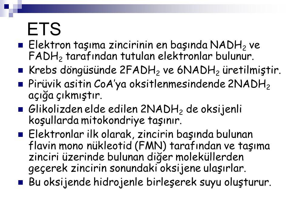 ETS Elektron taşıma zincirinin en başında NADH2 ve FADH2 tarafından tutulan elektronlar bulunur. Krebs döngüsünde 2FADH2 ve 6NADH2 üretilmiştir.