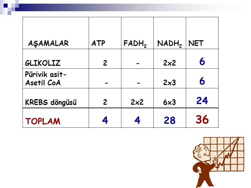 36 6 24 4 28 TOPLAM AŞAMALAR ATP FADH2 NADH2 NET GLIKOLIZ 2 - 2x2