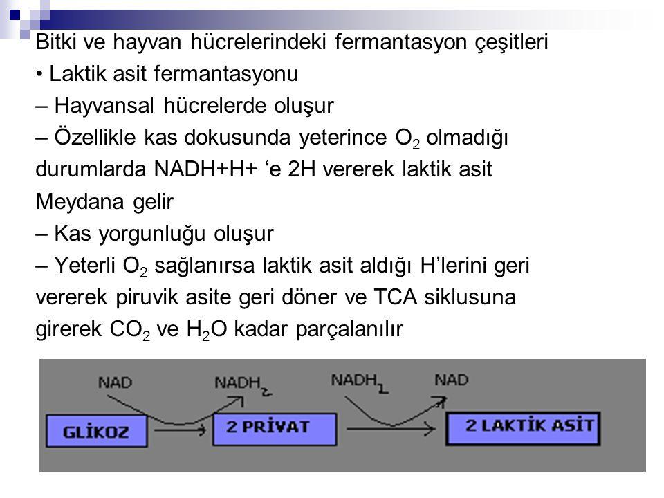 Bitki ve hayvan hücrelerindeki fermantasyon çeşitleri
