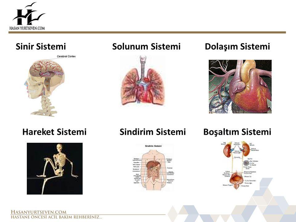 Sinir Sistemi Solunum Sistemi Dolaşım Sistemi
