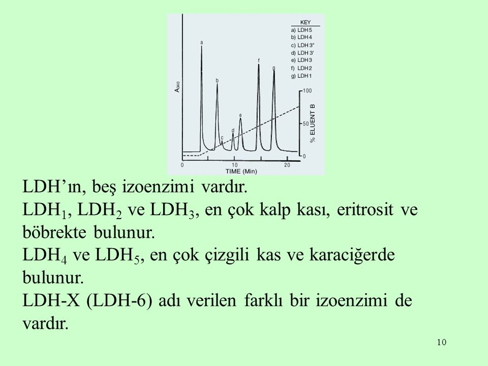 LDH'ın, beş izoenzimi vardır.