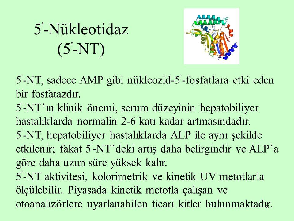 5 -Nükleotidaz (5 -NT) 5 -NT, sadece AMP gibi nükleozid-5 -fosfatlara etki eden bir fosfatazdır.