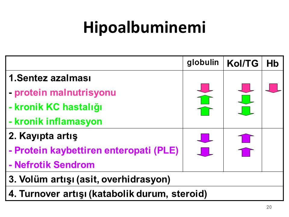 Hipoalbuminemi Kol/TG Hb 1.Sentez azalması - protein malnutrisyonu