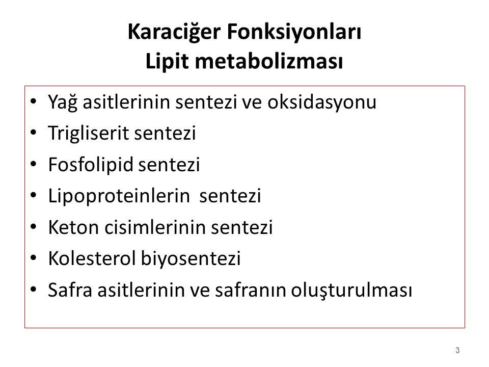Karaciğer Fonksiyonları Lipit metabolizması