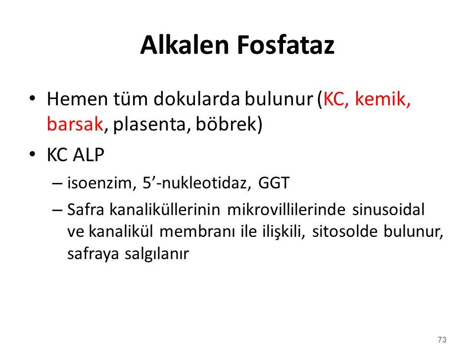 Alkalen Fosfataz Hemen tüm dokularda bulunur (KC, kemik, barsak, plasenta, böbrek) KC ALP. isoenzim, 5'-nukleotidaz, GGT.