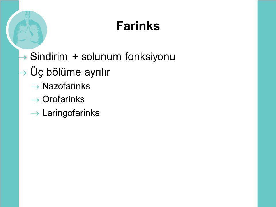 Farinks Sindirim + solunum fonksiyonu Üç bölüme ayrılır Nazofarinks