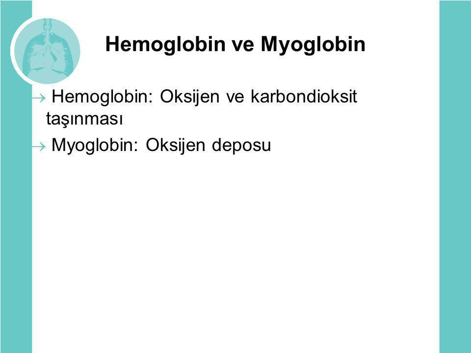 Hemoglobin ve Myoglobin