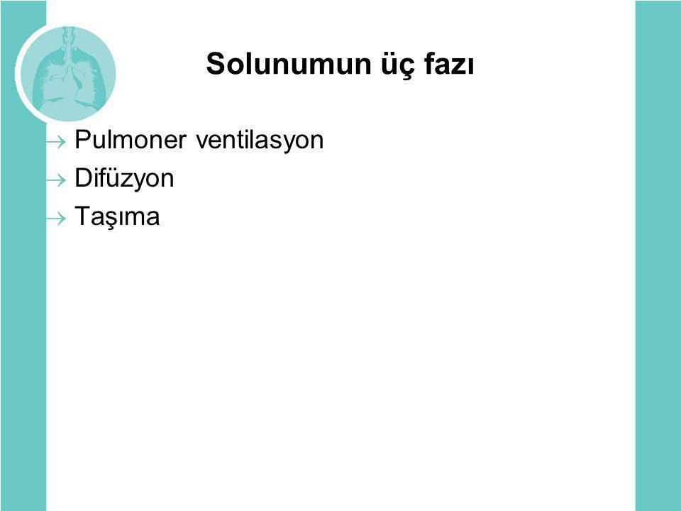 Solunumun üç fazı Pulmoner ventilasyon Difüzyon Taşıma