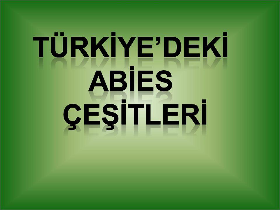 TÜRKİYE'DEKİ ABİES ÇEŞİTLERİ