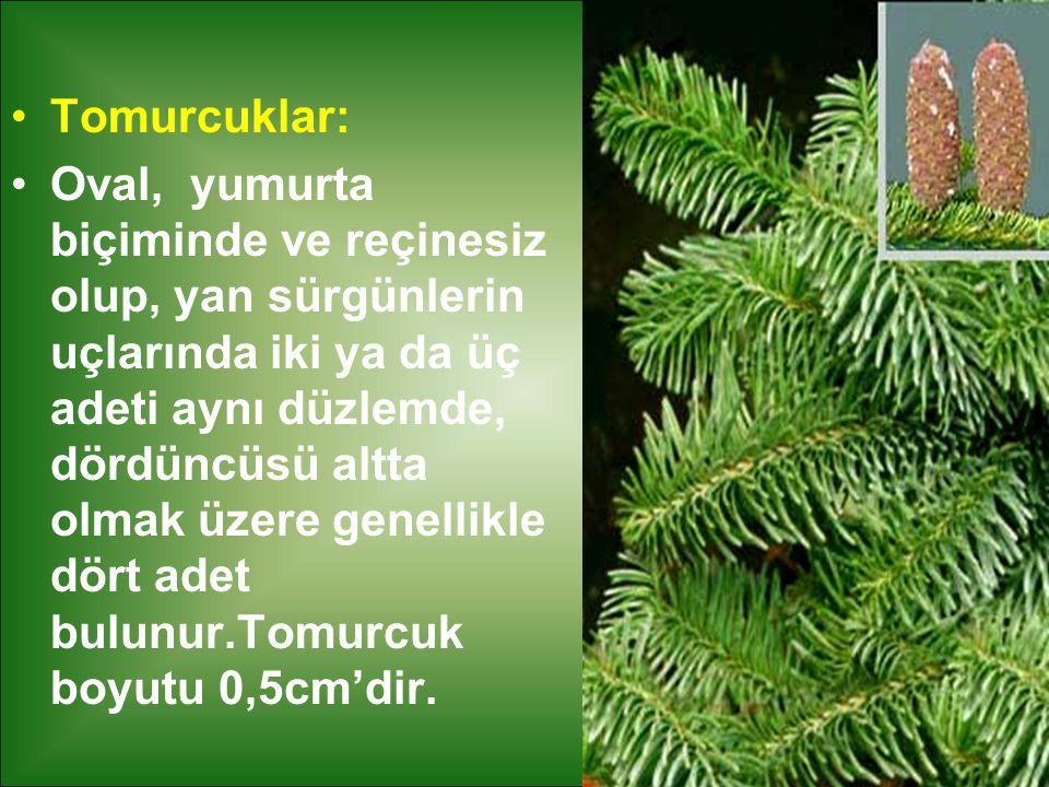 Tomurcuklar: