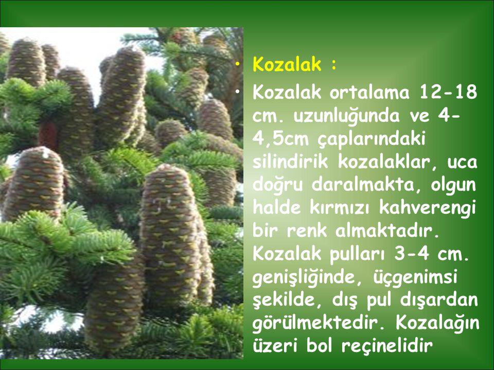 Kozalak :