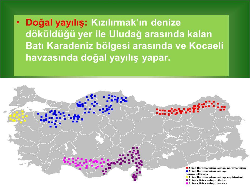 Doğal yayılış: Kızılırmak'ın denize döküldüğü yer ile Uludağ arasında kalan Batı Karadeniz bölgesi arasında ve Kocaeli havzasında doğal yayılış yapar.