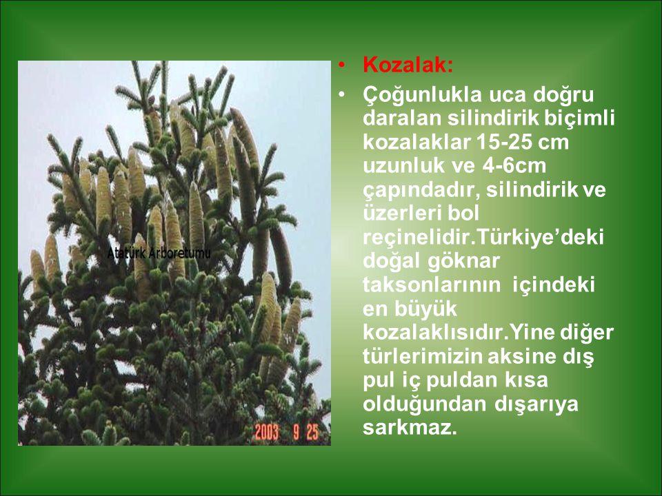 Kozalak: