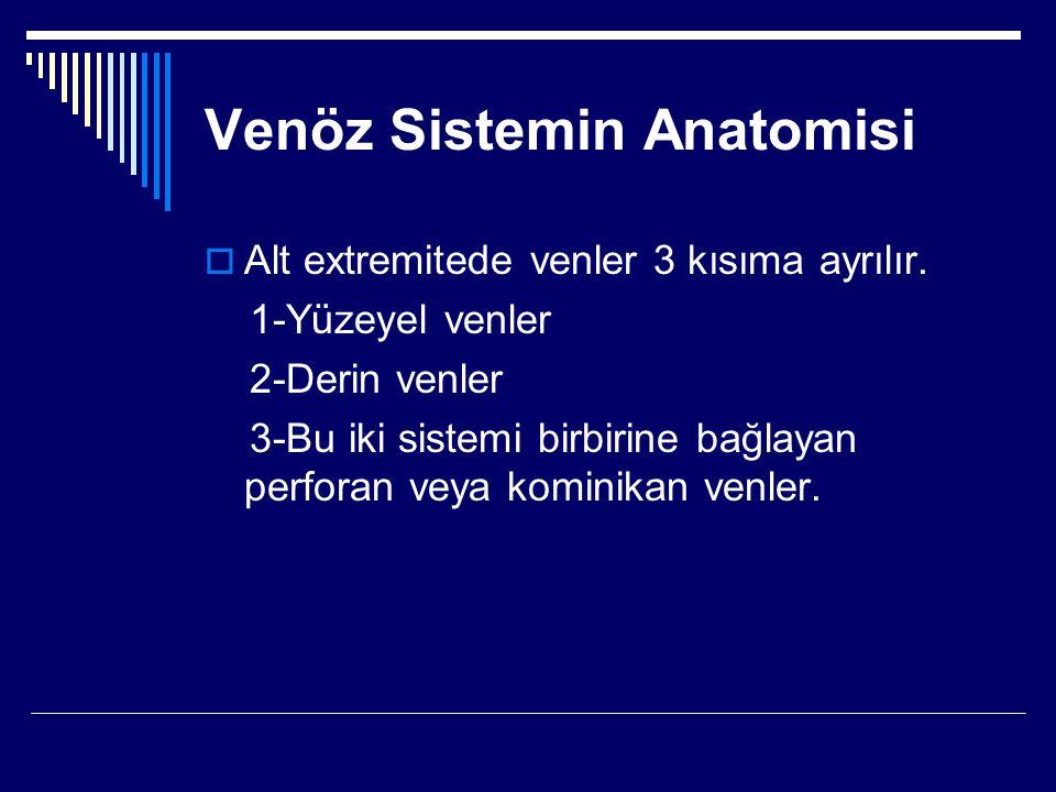 Venöz Sistemin Anatomisi