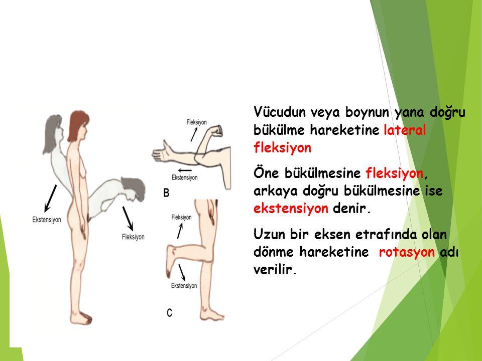 Vücudun veya boynun yana doğru bükülme hareketine lateral fleksiyon