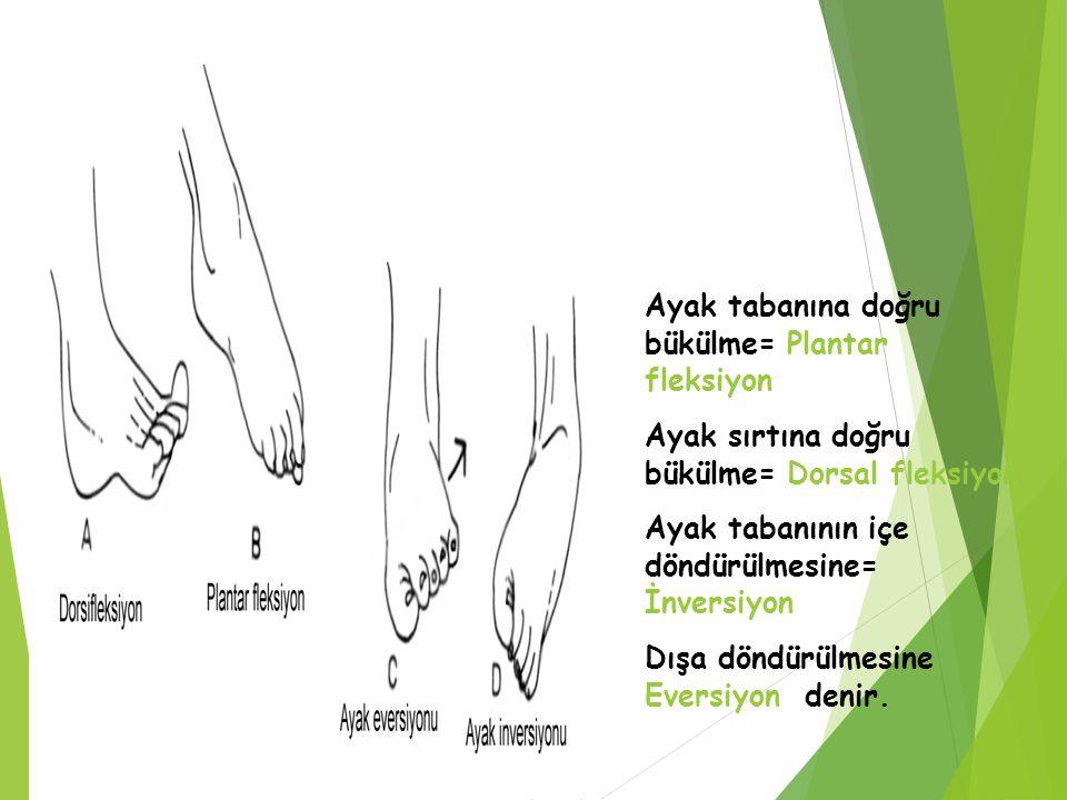 Ayak tabanına doğru bükülme= Plantar fleksiyon