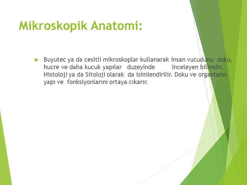 Mikroskopik Anatomi: