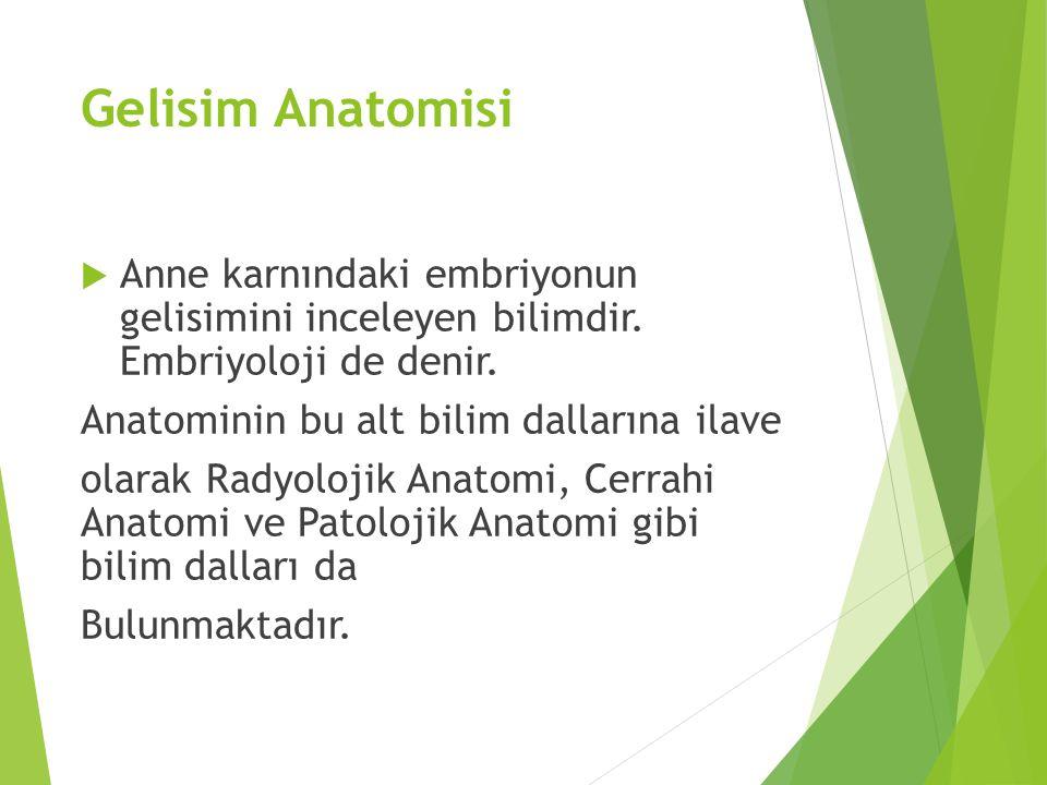 Gelisim Anatomisi Anne karnındaki embriyonun gelisimini inceleyen bilimdir. Embriyoloji de denir.
