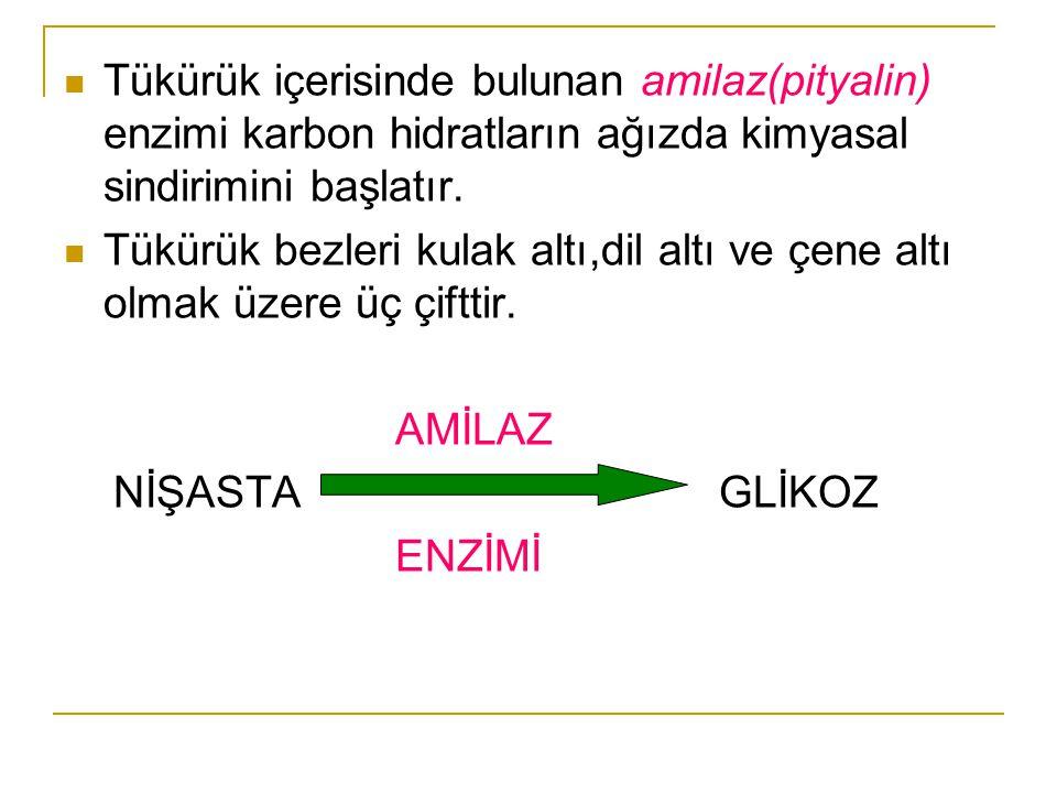 Tükürük içerisinde bulunan amilaz(pityalin) enzimi karbon hidratların ağızda kimyasal sindirimini başlatır.