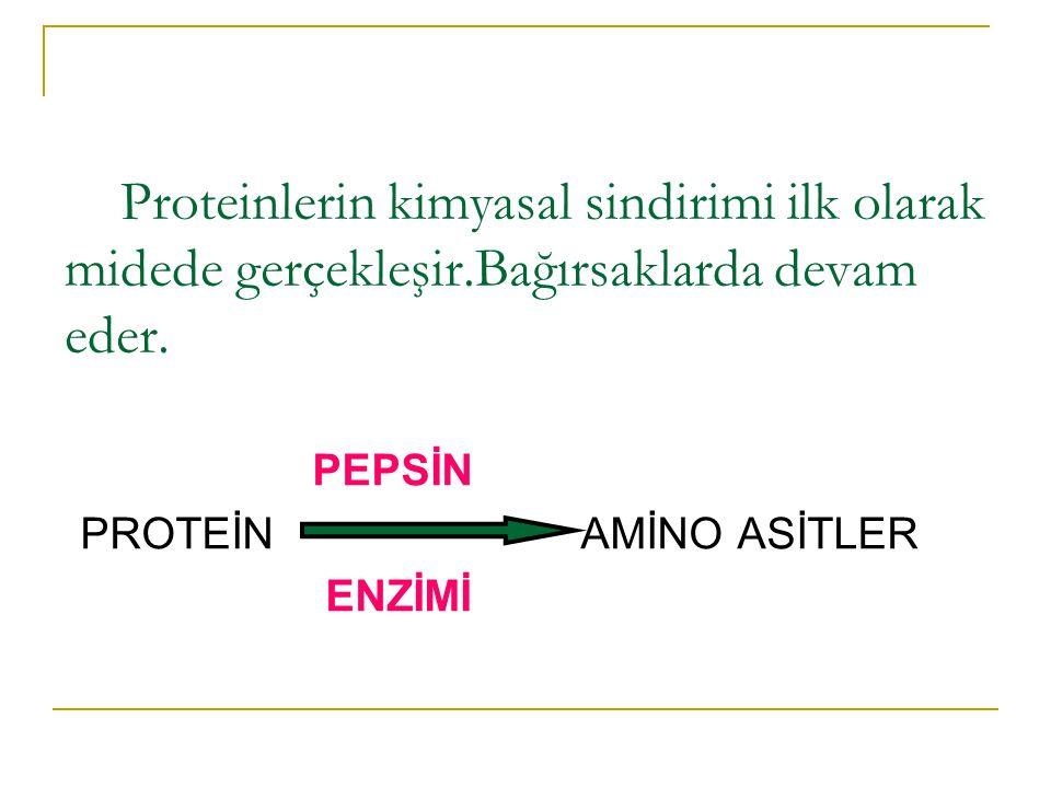 Proteinlerin kimyasal sindirimi ilk olarak midede gerçekleşir