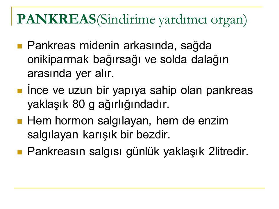 PANKREAS(Sindirime yardımcı organ)
