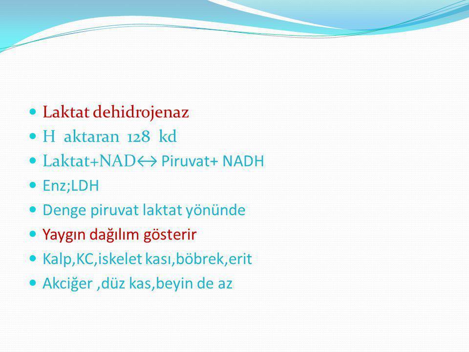 Laktat dehidrojenaz H aktaran 128 kd. Laktat+NAD↔ Piruvat+ NADH. Enz;LDH. Denge piruvat laktat yönünde.