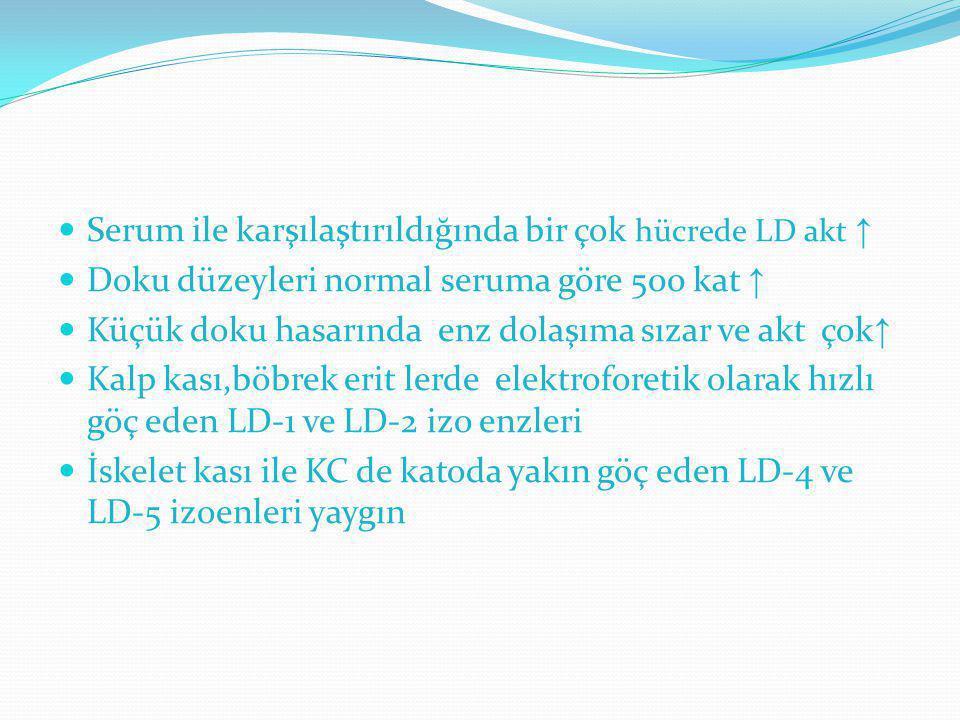 Serum ile karşılaştırıldığında bir çok hücrede LD akt ↑