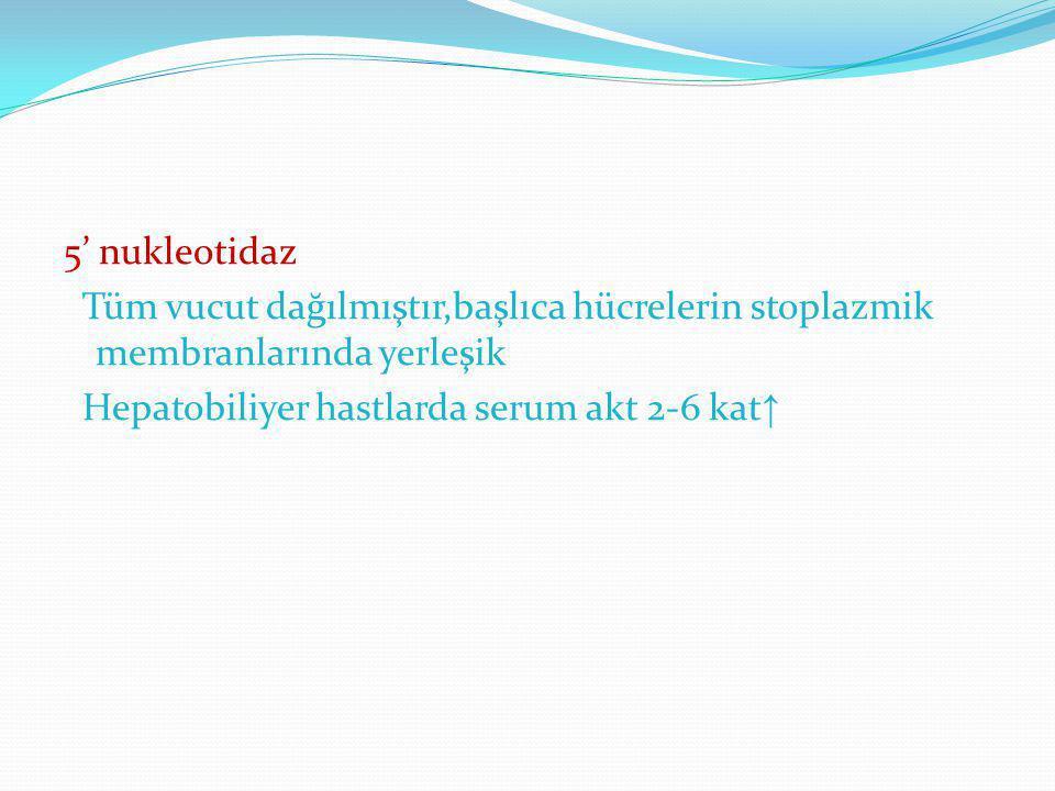 5' nukleotidaz Tüm vucut dağılmıştır,başlıca hücrelerin stoplazmik membranlarında yerleşik Hepatobiliyer hastlarda serum akt 2-6 kat↑