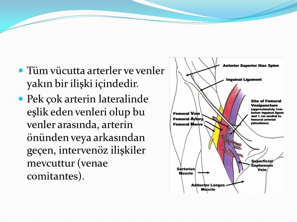 Tüm vücutta arterler ve venler yakın bir ilişki içindedir.