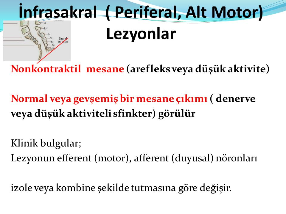 İnfrasakral ( Periferal, Alt Motor) Lezyonlar